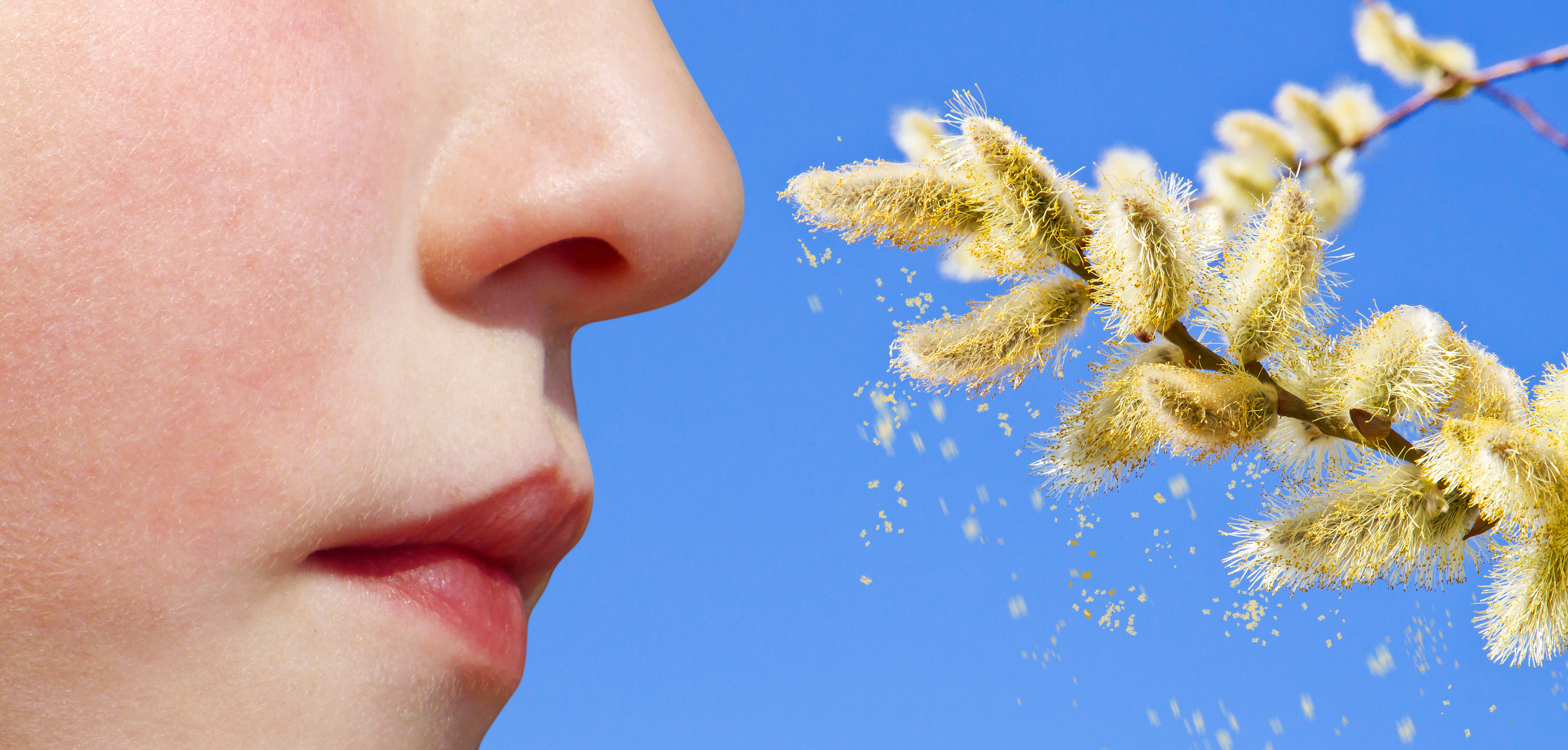 institut pasteur - allergies
