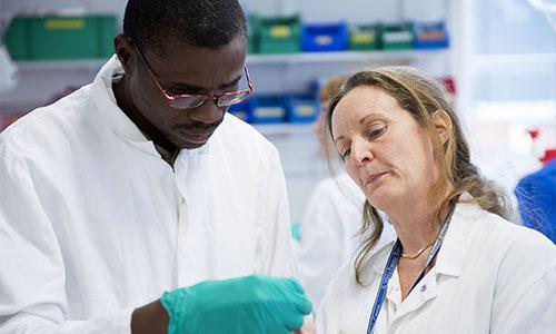 Doctoral and Post-Doctoral Programs | Institut Pasteur