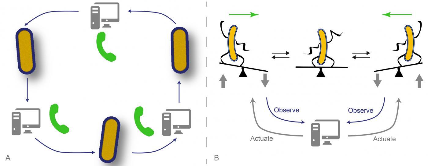 L'informatique aux commandes de la biologie ou comment contrôler une population de cellules par ordinateur