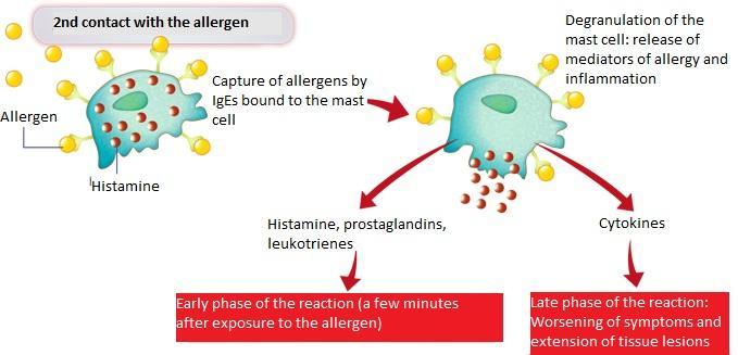 titan allergi symptom