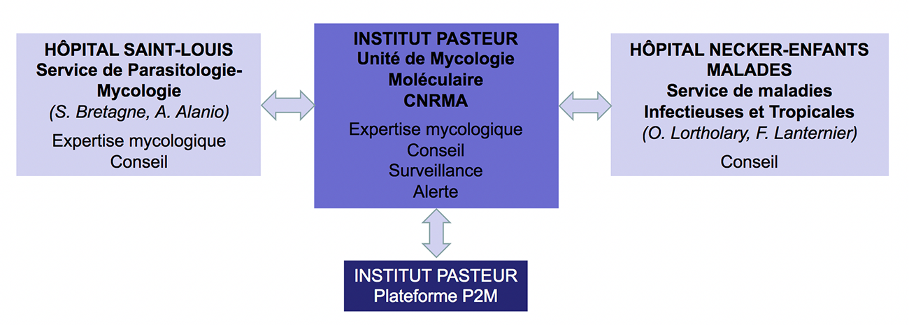 CNR Mycoses invasives - Institut Pasteur