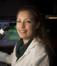 Lida Katsimpardi - Institut Pasteur