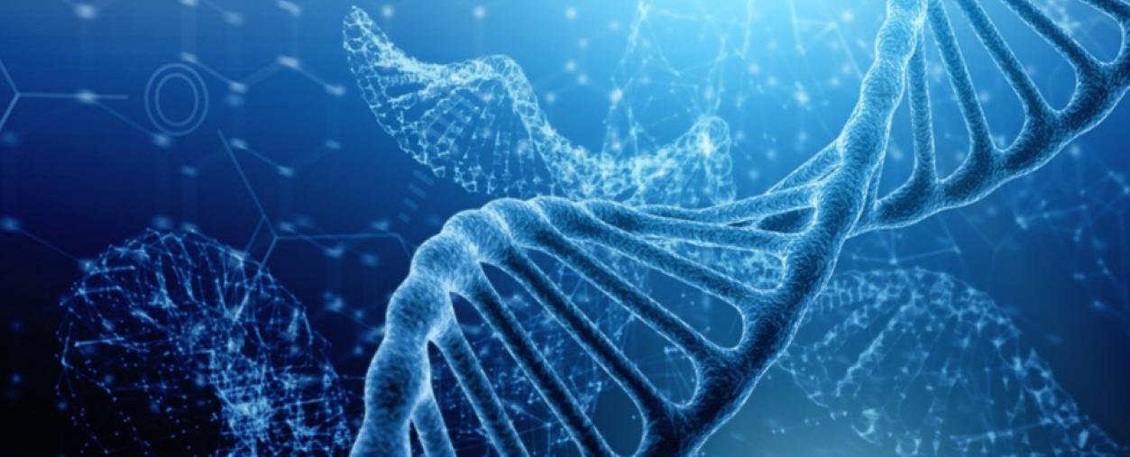 Base Z : la voie de biosynthèse d'une nouvelle base azotée de l'ADN élucidée