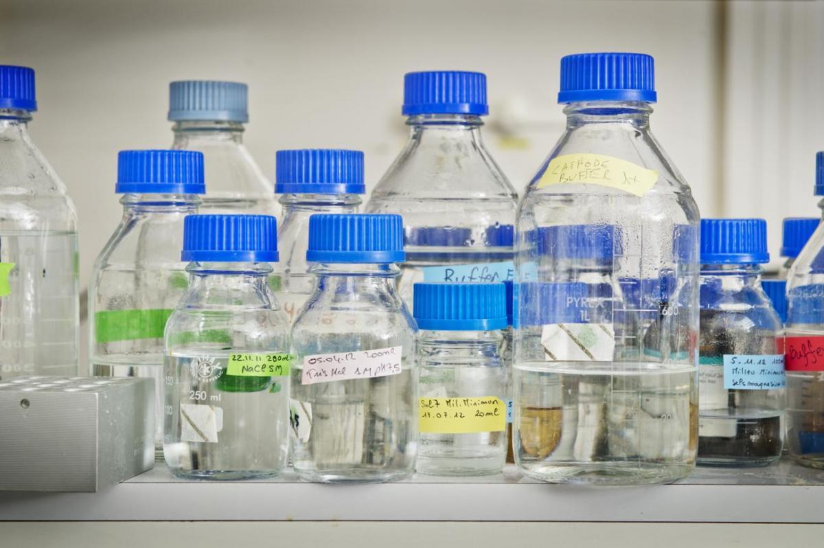 Une étude préclinique montre que l'hydroxychloroquine n'a pas d'effet antiviral contre le SARS-CoV-2 in vivo