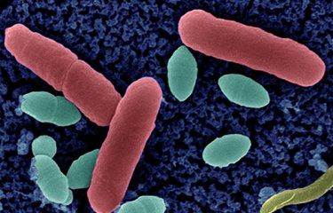 Résistance aux antibiotiques - Institut Pasteur