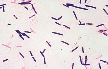 Fiche Maladie - Botulisme - Institut Pasteur