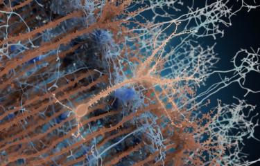 Néo-neurones - Institut Pasteur