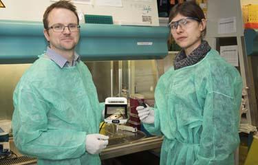 Hépatite C : un nouveau test de diagnostic au chevet du patient