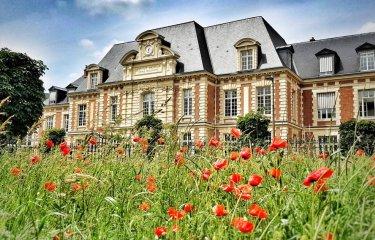 Duclaux Poppies