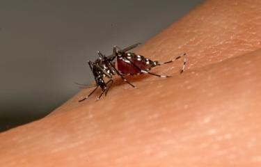 Zika et microcéphalie : le premier trimestre de grossesse est le plus critique