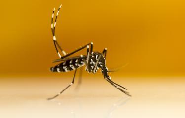 Aedes albopictus - Institut Pasteur