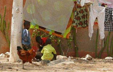 Volailles - Enfants - Sénégal - Institut Pasteur