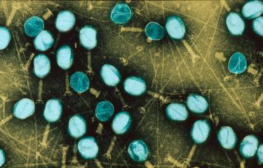 bacteriophage - institut pasteur