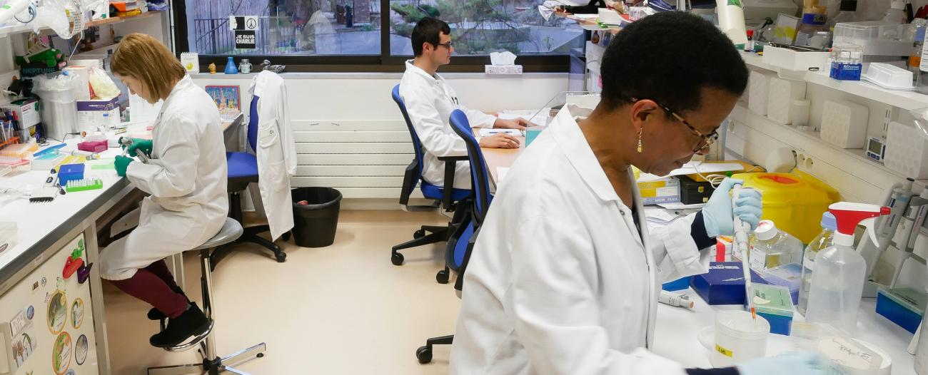 Dans le laboratoire Microenvironnement et immunité - Institut Pasteur